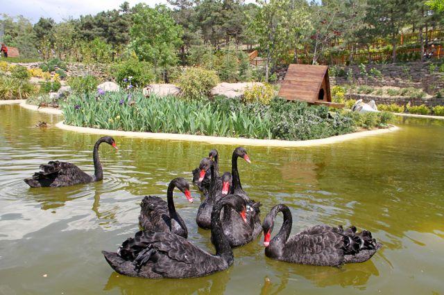 قیمت بلیط باغ پرندگان